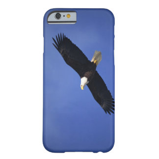 Aigle chauve montant, Alaska Coque iPhone 6 Barely There