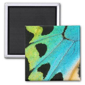 aile bleue et verte de papillon aimant