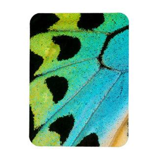 aile bleue et verte de papillon magnet flexible