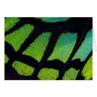 Aile de papillon de vert et de noir de chaux carte de vœux