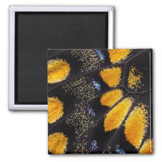 Aile orange et noire de papillon aimant