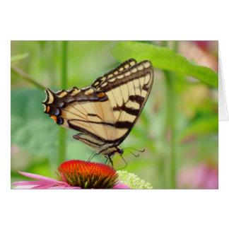 Ailes de tigre sur Coneflower - papillon Carte De Vœux
