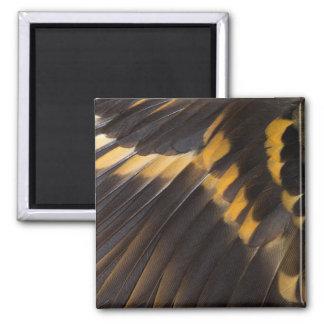 Aimant Abrégé sur noir et jaune plume