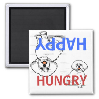 Aimant affamé heureux de Bichon Frise Fed