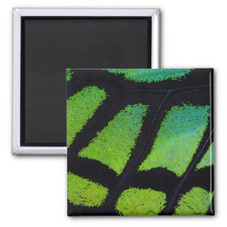 Aimant Aile de papillon de vert et de noir de chaux
