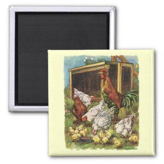 Aimant Animaux de ferme vintages, coq, poules, poulets