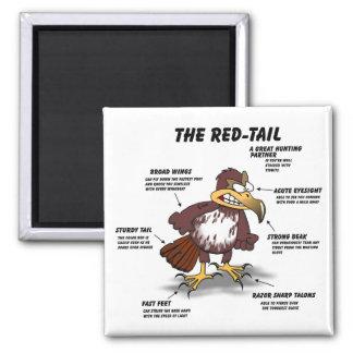 Aimant bande dessinée de faucon de Rouge-queue