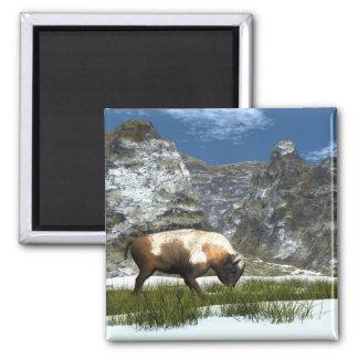 Aimant Bison dans la montagne