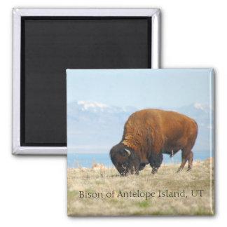 Aimant Bison de l'île d'antilope, UT