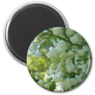 Aimant blanc de lilas