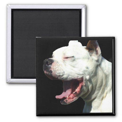 Aimant blanc de sourire de chien de boxeur