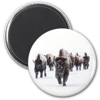 Aimant Buffalo