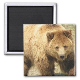 Aimant carré d'ours gris