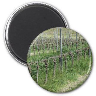 Aimant Champ nu de vignoble en hiver. La Toscane, Italie