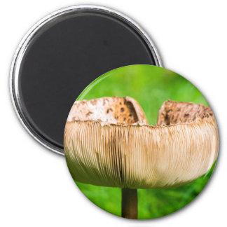Aimant Champignon de Brown dans grass.JPG vert