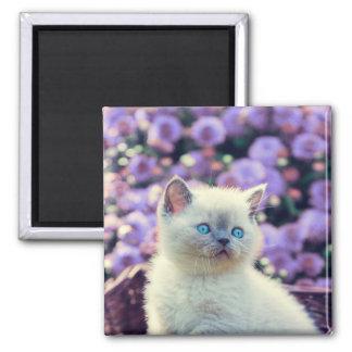 Aimant Chat de bébé de chaton observé par bleu en fleurs