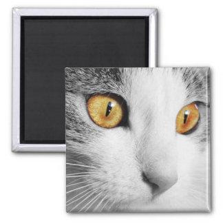 Aimant Chat gris et blanc