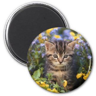 Aimant Chat se reposant dans le jardin d'agrément