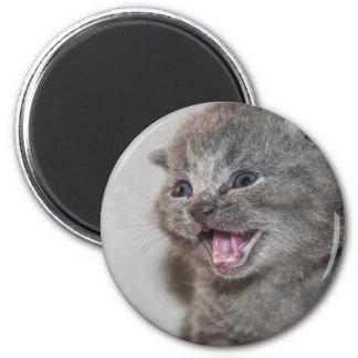 Aimant Chaton de gris de Miaowing