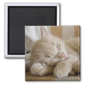Aimant Chaton de sommeil