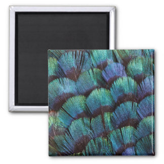 Aimant Conception bleu-vert de plume de faisan