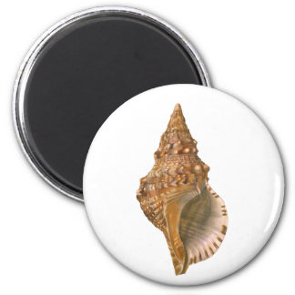 Aimant Coquillage vintage de Triton Shell, animal marin