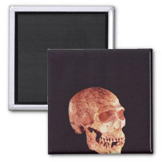 Aimant Crâne de Néanderthal, découvert sur Mt Carmel
