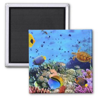 Aimant Créatures colorées de récif coralien