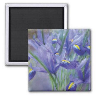 Aimant d'art de bouquet d'iris