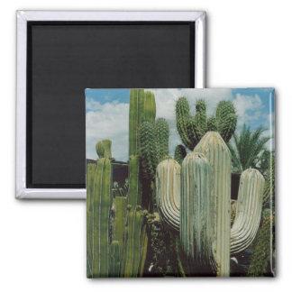 Aimant de cactus