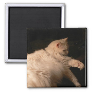 Aimant de carré de lumière et de chat d'ombre