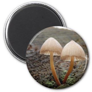 Aimant de champignon d'inclinata de Mycena