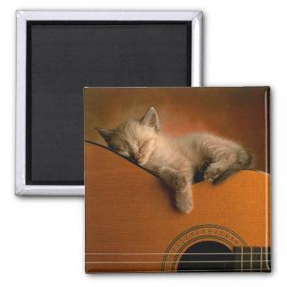 aimant de chaton-sur-guitare