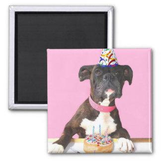 Aimant de chien de boxeur de joyeux anniversaire