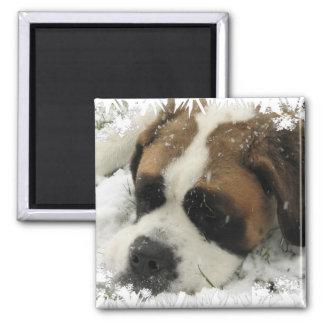 Aimant de chien de St Bernard