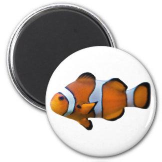 Aimant de Clownfish