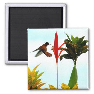 Aimant de colibri
