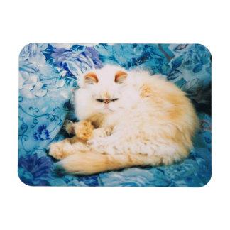 Aimant de photo de chat persan magnet flexible