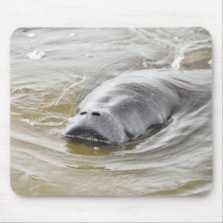 Aimant de plage d Ormond de lamantin de la Floride Tapis De Souris