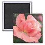 Aimant de rose de rose