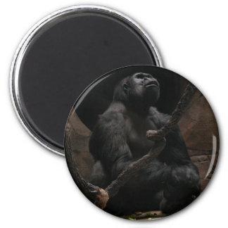 Aimant de /Round de gorille