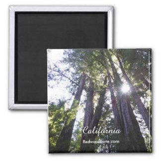 Aimant de séquoias de Henry Cowell