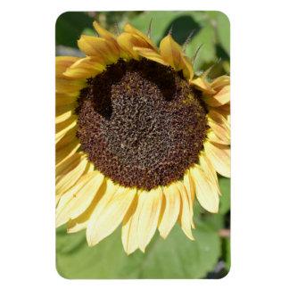 Aimant de tournesol de beauté d automne magnets rectangulaires