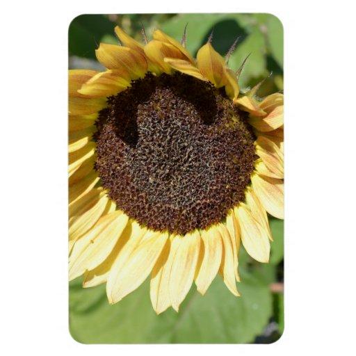 Aimant de tournesol de beauté d'automne magnets rectangulaires