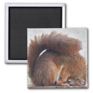 Aimant d'écureuil de yoga