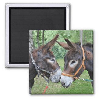Aimant Deux ânes indiquant le bonjour