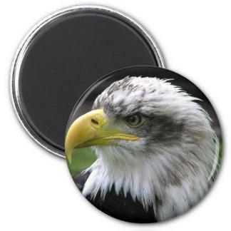 Aimant Eagle chauve