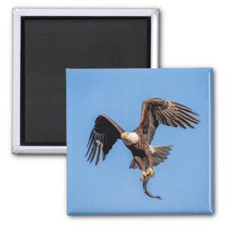 Aimant Eagle chauve avec un poisson