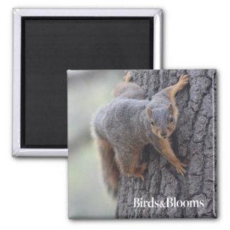 Aimant Écureuil de accrochage