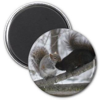 Aimant Écureuil noir